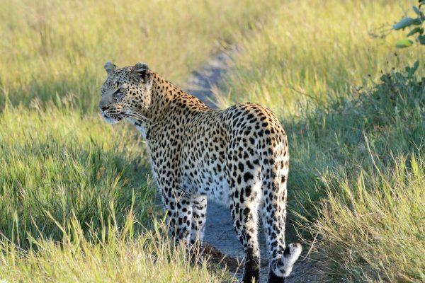 Okavango Delta Group Tours
