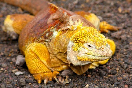 PhotoFly Travel Club | Galapagos iguana tours | PhotoFly Travel Club