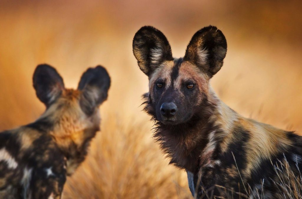 PhotoFly Travel Club | Botswana1 | PhotoFly Travel Club