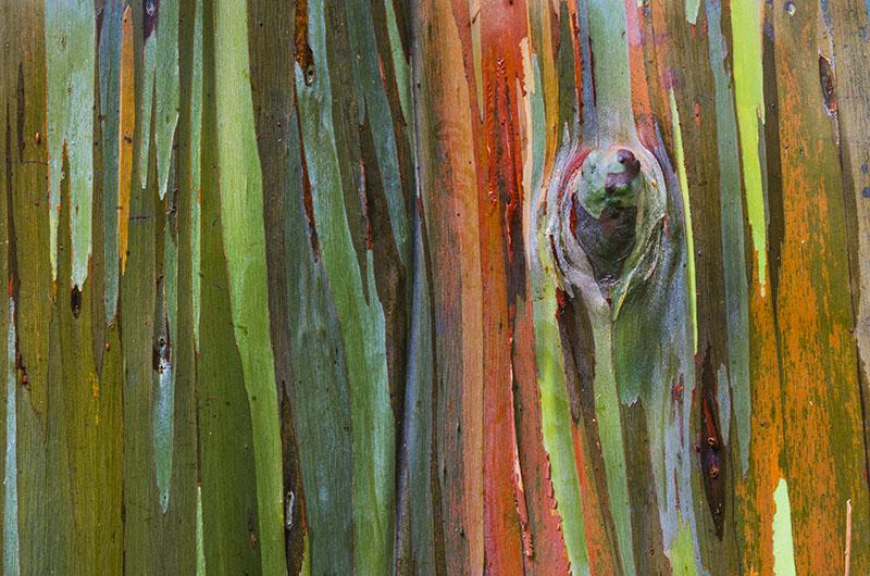 PhotoFly Travel Club | Rainbow Tree Hor WP | PhotoFly Travel Club
