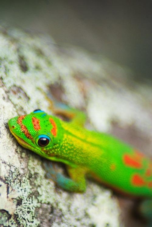 PhotoFly Travel Club | gecko 5 | PhotoFly Travel Club