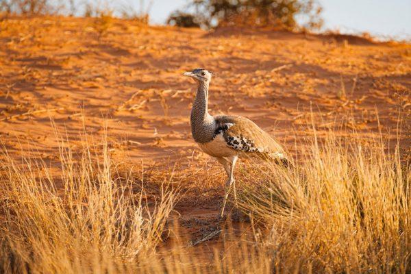 Kalahari Desert group tour