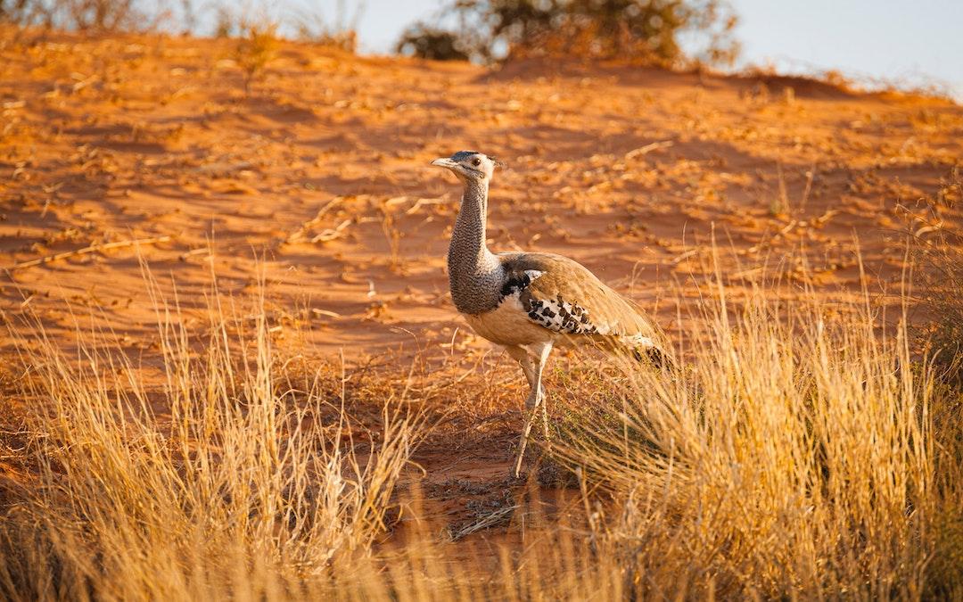 PhotoFly Travel Club   Kalahari Desert group tour   PhotoFly Travel Club